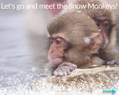 Let's go and meet the Snow Monkey!